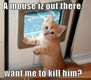 A mouse iz out there.  want me to kill him?