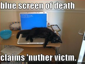 blue screen of death  claims 'nuther victm.