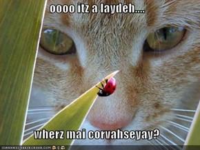 oooo itz a laydeh....  wherz mai corvahseyay?