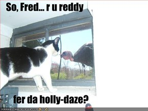 So, Fred... r u reddy         fer da holly-daze?