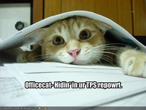 Officecat- Hidin' in ur TPS repowrt.
