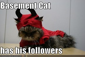 Basement Cat  has his followers