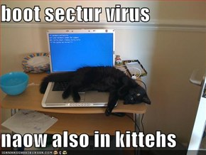 boot sectur virus  naow also in kittehs