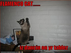FLAMENCO CAT.......  iz dancin on yr tablez
