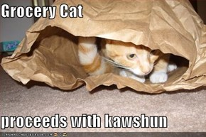 Grocery Cat  proceeds with kawshun