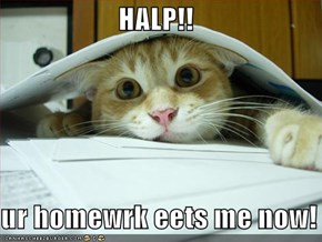 HALP!!  ur homewrk eets me now!