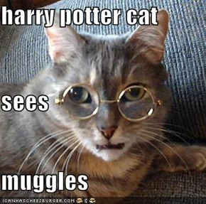 harry potter cat sees muggles