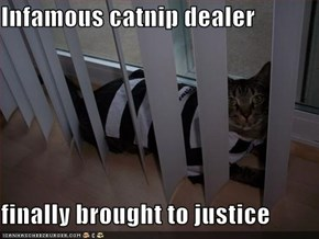 Infamous catnip dealer  finally brought to justice