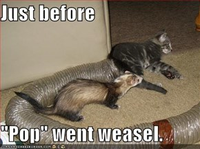 "Just before  ""Pop"" went weasel."