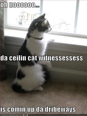 oh noooooo... da ceilin cat witnessessess is comin up da dribeways