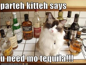 parteh kitteh says  u need mo tequila!!!