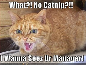What?! No Catnip?!!  I Wanna Seez Ur Manager!