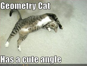 Geometry Cat  Has a cute angle
