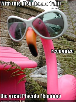 With this disguise,no 1 will recognize the great Placido Flamingo