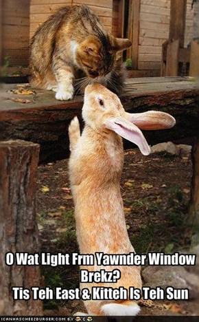 O Wat Light Frm Yawnder Window Brekz?Tis Teh East & Kitteh Is Teh Sun