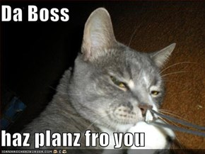 Da Boss  haz planz fro you