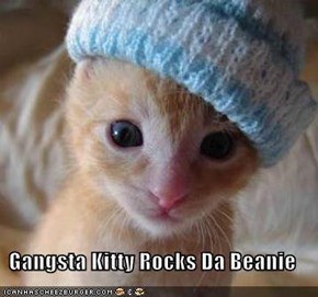 Gangsta Kitty Rocks Da Beanie
