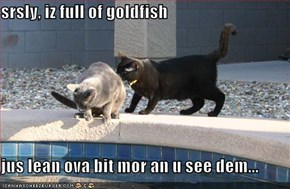 srsly, iz full of goldfish  jus lean ova bit mor an u see dem...