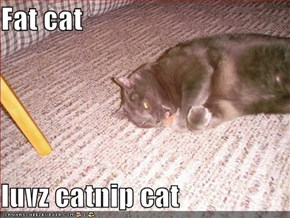 Fat cat  luvz catnip cat