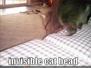 invisible cat head