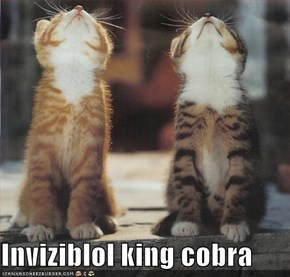 Inviziblol king cobra