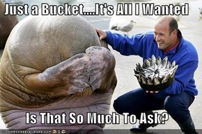 Just a Bucket....It's All I Wanted  Is That So Much To Ask?