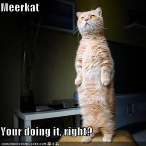 Meerkat  Your doing it, right?