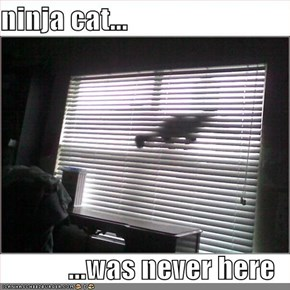 ninja cat...  ...was never here