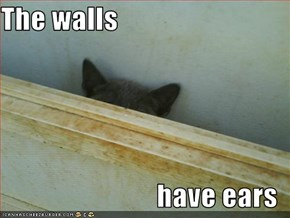 The walls  have ears