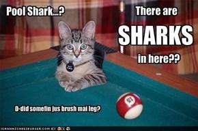 Pool Shark...?