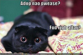 Adop nao pwease? Fud righ aftar?