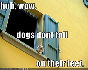 huh, wow. dogs dont fall on their feet.