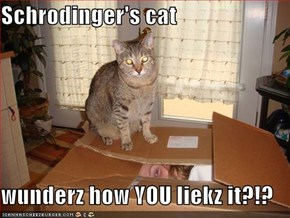 Schrodinger's cat  wunderz how YOU liekz it?!?