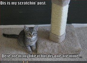 Dis is my scratchin' post.  Dere are many like it but dis one are mine ...