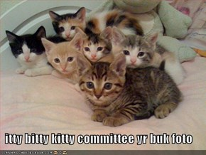 itty bitty kitty committee yr buk foto