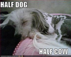 HALF DOG  HALF COW