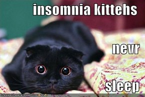 insomnia kittehs  nevr  sleep