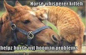 Horse whisperer kitteh  helpz horse wit hooman problemz