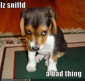 Iz sniffd  a bad thing