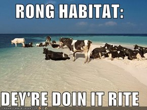 RONG HABITAT:  DEY'RE DOIN IT RITE