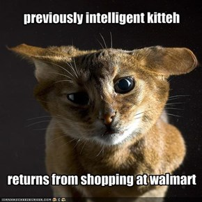 previously intelligent kitteh