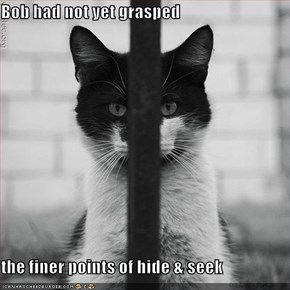 Bob had not yet grasped  the finer points of hide & seek