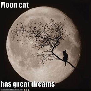 Moon cat  has great dreams