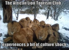 The African Lion Tourism Club      experiences a bit of culture shock