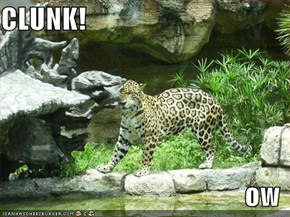 CLUNK!  ow