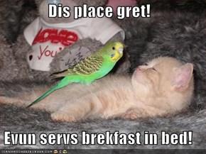 Dis place gret!  Evun servs brekfast in bed!