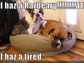 I haz a Razbeary!!!!!!!!11!  I haz a tired.