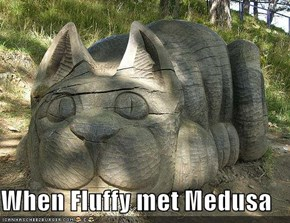 When Fluffy met Medusa