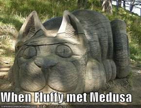 When Fluffy met Medusa