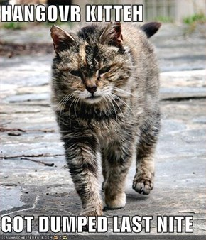 HANGOVR KITTEH  GOT DUMPED LAST NITE